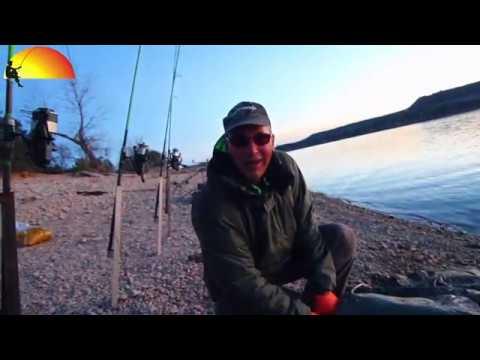 Ebro meerval – De Vissende Hollander