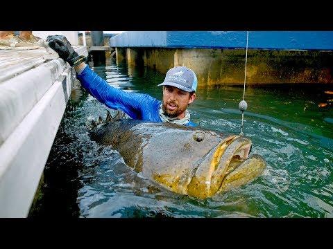 Grootste vis vanaf de kant ooit – Ruim 150 kilo