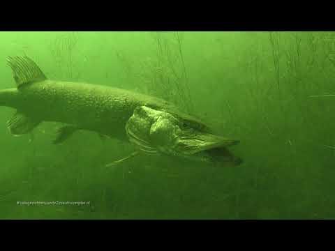 Viswalhalla onder de rook van Rdam