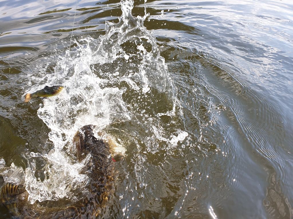 Tackle Meister Review – Savage Gear 4D Pulse Tail Trout – Ideaal voor de kantvisser
