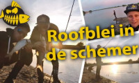 ***Roofmeister VIDEO*** Roofblei pret in de avonduren – Hakkert & Honders><span class=