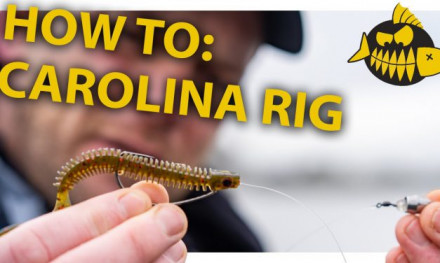 How to: Carolina rig van A tot Z met LUC COPPENS