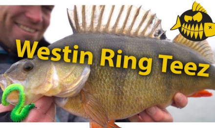 Ring Teez – Carolina & Texas rig