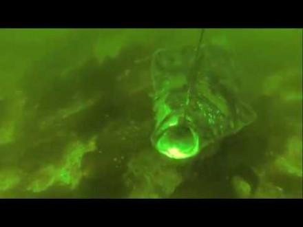 Heilbot aanbeten onder water