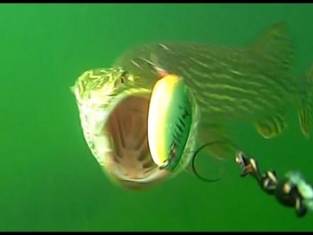 10 heerlijke live onder water aanbeten