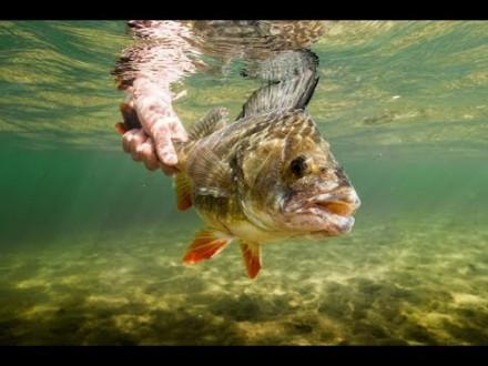 Alles over de gesloten tijd – Topvideo van Sportvisserij Nederland