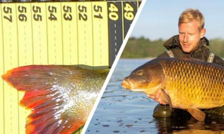 ***Breaking news*** Nederlands record baars voor karpervisser