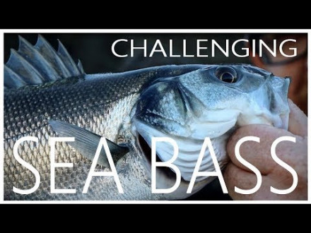 Dit is vissen – Ode aan de zeebaars
