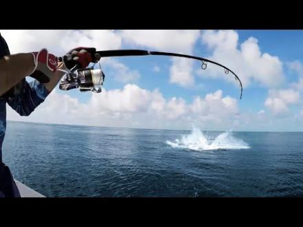 Waanzinnig spektakel op sportvis numéro uno – De Giant Trevally!