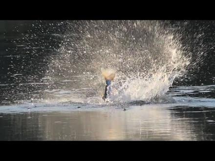 Brute live aanbeten van roofblei op topwaters