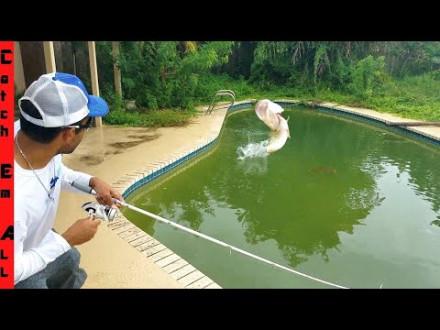 Bass in verlaten zwembad