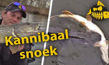 ***Roofmeister VIDEO*** Kannibalistische metersnoek pakt kleinere snoek – Een dag met jerkbaits