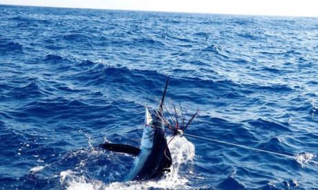 De tonijn en zwaardvis is los als nooit tevoren